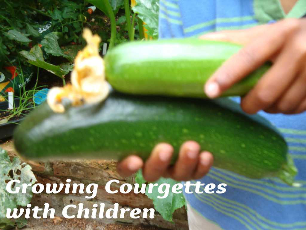 Growing courgettes with children