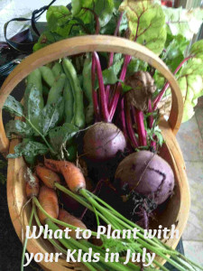 what to plant with your kids in July