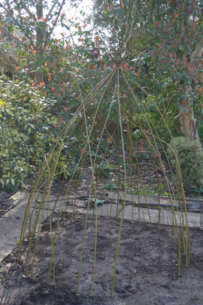 willow wigwam