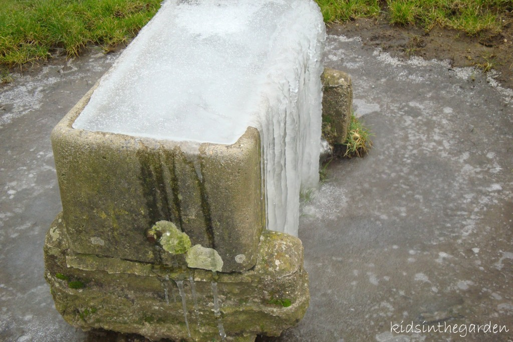 frozen cattle trough