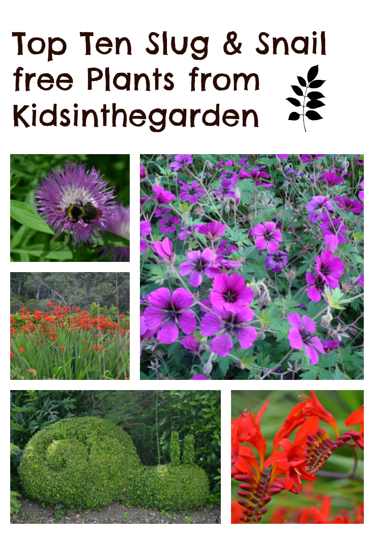 My top 10 slug and snail resistent plants kidsinthegarden slug and snail free plants mightylinksfo