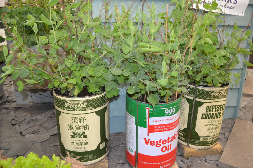 Peas in containers
