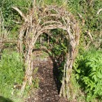 small willow tunnel