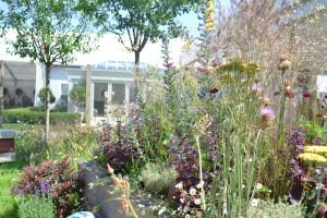 Hampton Court Flower Show - Bee friendly Garden