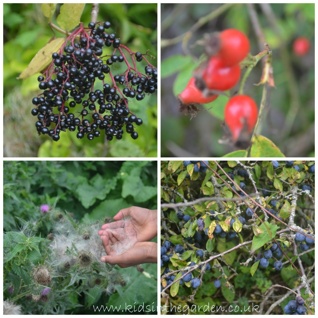 berry2collage