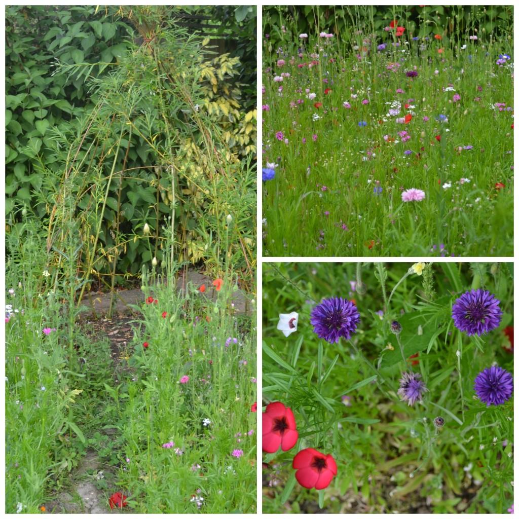 wildflowers June