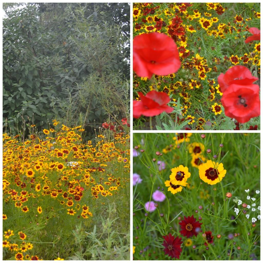wildflowersaugust