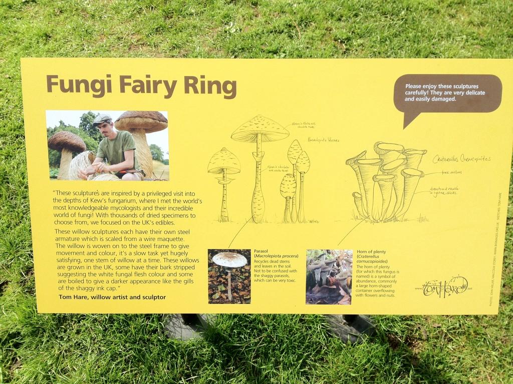 Fungi Fairy Ring