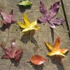 Autumn leaf Hopscotch