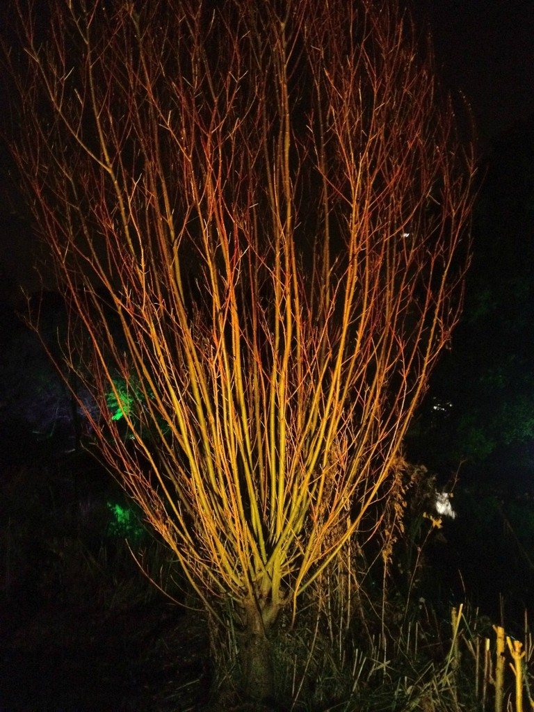Enchanted Woodland garden Syon Park