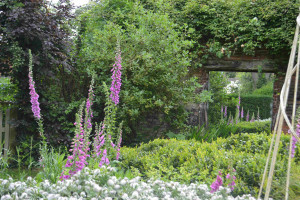 foxgloves reflecting in garden mirror