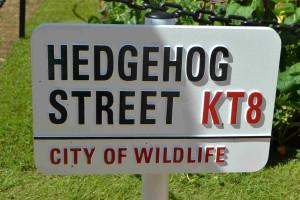 hedgehog Street garden