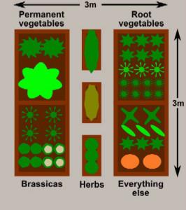 planting plan