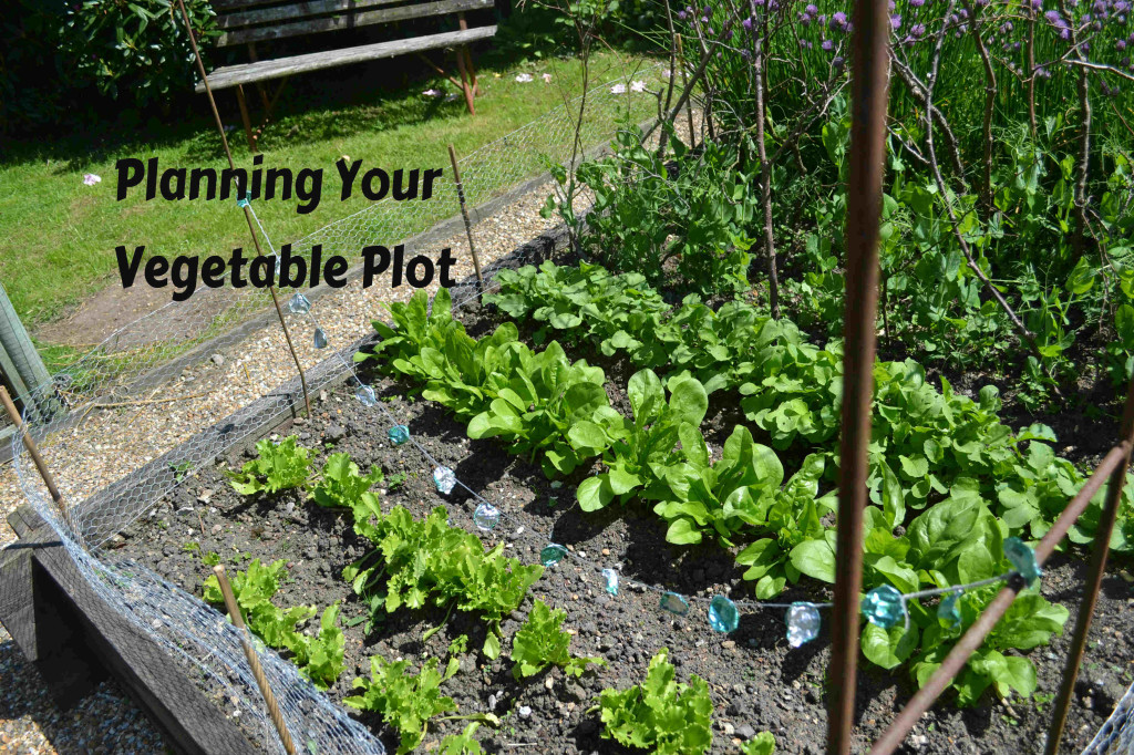 Vegetable Garden Pictures For Kids