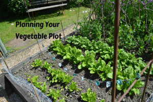 planning your vegetable plot
