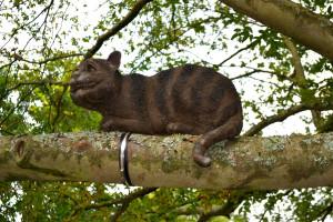 wisley chesire cat