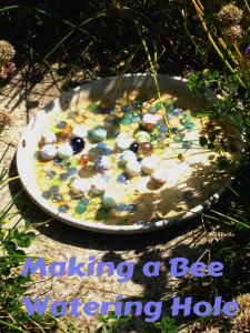 Bee watering hole