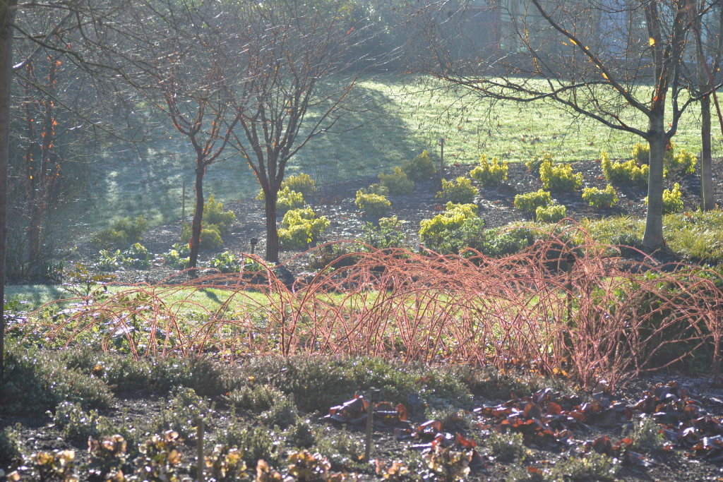 Winter garden Savill
