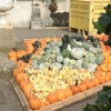 pumpkins kew