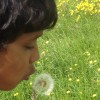 Blowing Dandelion Clocks